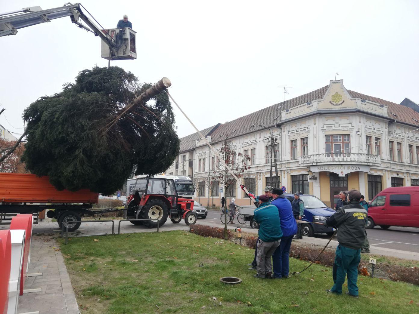 A 20 éves karácsonyfa története, mely egy család otthonából érkezett Kiskőrös főterére